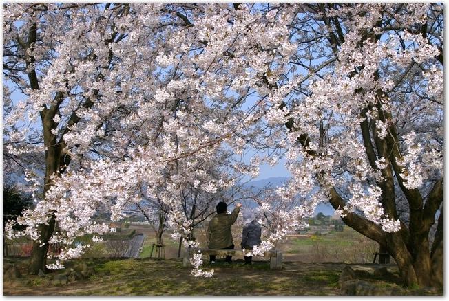 満開の桜の下でベンチに座ってお花見をする人の様子