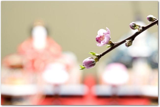 桃の枝の後ろにぼやけたお雛様が飾ってある様子
